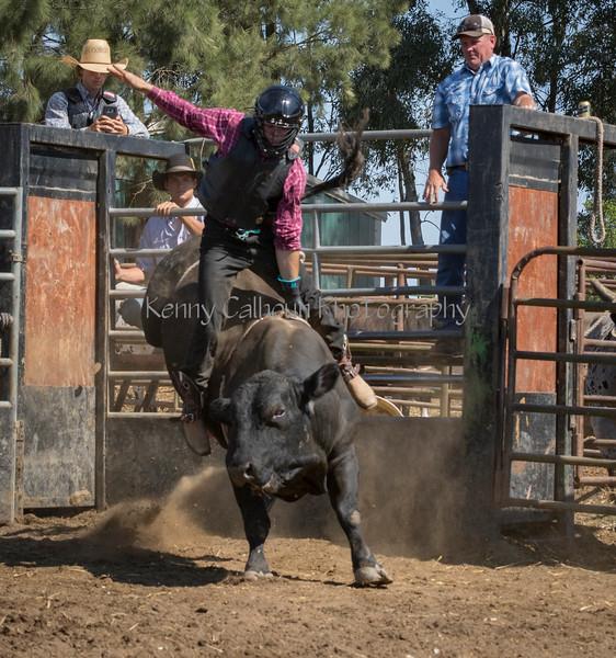 6-25 Steinmetz Bucking Stock951A3565