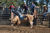 6-25 Steinmetz Bucking Stock951A2928