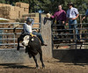 6-25 Steinmetz Bucking Stock951A3439