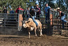 6-25 Steinmetz Bucking Stock951A2919