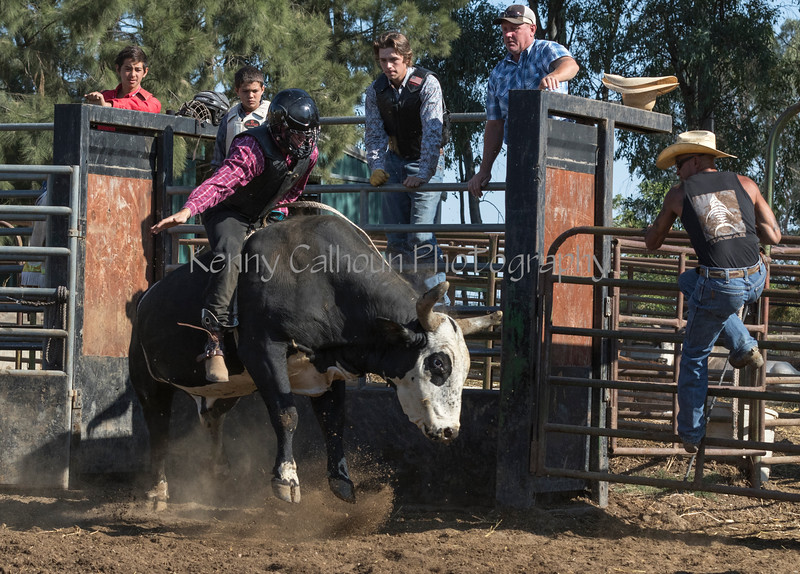 6-25 Steinmetz Bucking Stock951A2975