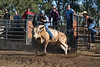 6-25 Steinmetz Bucking Stock951A2918