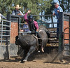 6-25 Steinmetz Bucking Stock951A3559