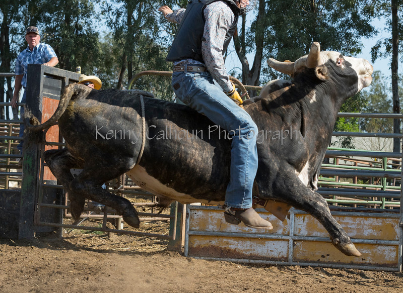 6-25 Steinmetz Bucking Stock951A3147