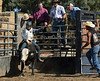 6-25 Steinmetz Bucking Stock951A3433