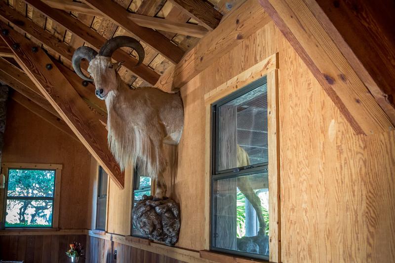 11-7-14 CRT Hearst Ranch_N5A9359