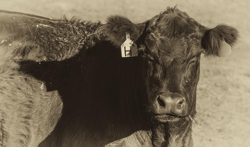 11-7-14 CRT Hearst Ranch_N5A9298-Edit