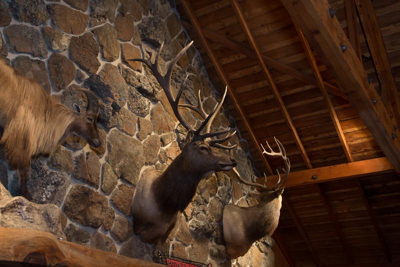 11-7-14 CRT Hearst Ranch_N5A9918