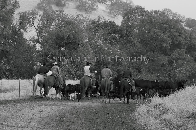 IMG_8820YoloLand&Cattle