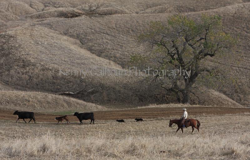 IMG_5993Yolo Land & Cattle
