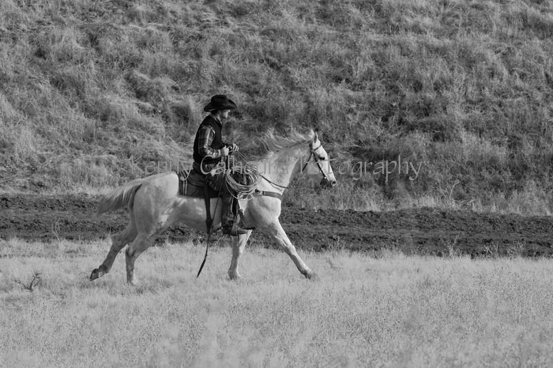 IMG_8583YoloLand&Cattle