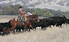 IMG_8688YoloLand&Cattle