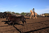 IMG_6232Yolo Land & Cattle