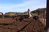 IMG_6192Yolo Land & Cattle