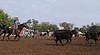 IMG_9013YoloLand&Cattle