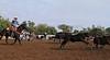 IMG_9014YoloLand&Cattle
