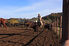 IMG_6191Yolo Land & Cattle