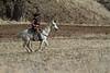 IMG_8579YoloLand&Cattle