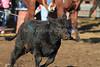 IMG_9419YoloLand&Cattle
