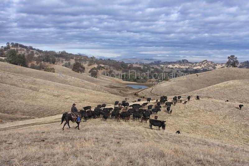 RickAtHuffPondYoloLand&Cattle