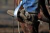 IMG_9223YoloLand&Cattle