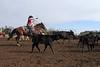 IMG_8991YoloLand&Cattle