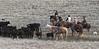 IMG_8782YoloLand&Cattle