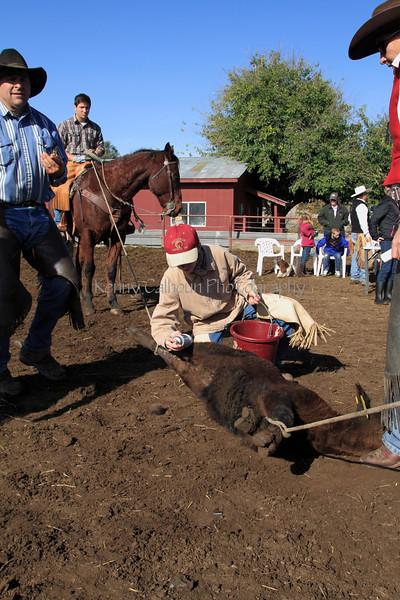 IMG_9278YoloLand&Cattle