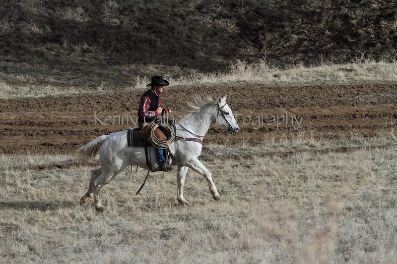 IMG_8575YoloLand&Cattle