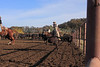 IMG_6190Yolo Land & Cattle