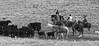 IMG_8781YoloLand&Cattle