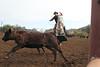 IMG_8961YoloLand&Cattle