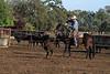 IMG_9384YoloLand&Cattle