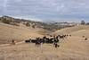 IMG_5996Yolo Land & Cattle
