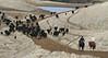 IMG_8608YoloLand&Cattle