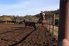 IMG_6204Yolo Land & Cattle