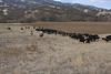 IMG_6018Yolo Land & Cattle