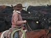 IMG_8673YoloLand&Cattle
