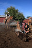 IMG_6154YoloLand&Cattle