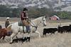 IMG_8697YoloLand&Cattle