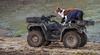 Yolo Land & Cattle 1-3-2014IMG_9466-Edit-2