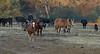 Yolo Land & Cattle 1-3-2014IMG_9437-Edit