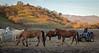 Yolo Land & Cattle 1-3-2014_N5A0519