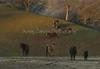 Yolo Land & Cattle 1-3-2014IMG_9419-Edit