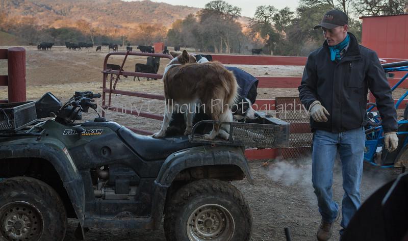 Yolo Land & Cattle 1-3-2014_N5A0491