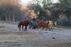 Yolo Land & Cattle 1-3-2014IMG_9458