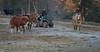 Yolo Land & Cattle 1-3-2014IMG_9451-Edit