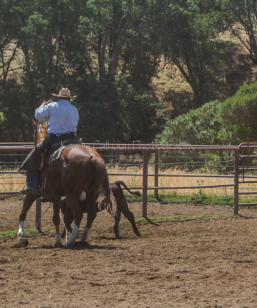 Yolo Land and Cattle 2014_N5A4422
