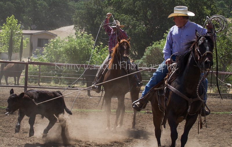 Yolo Land and Cattle 2014IMG_4914