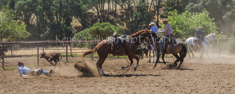 Yolo Land and Cattle 2014_N5A4433-2